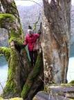 The trees are magical in Biogradska Gora National Park, Montenegro.